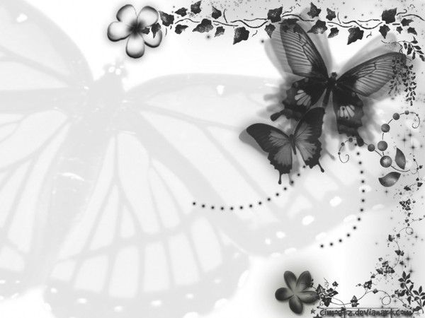 Fond de Blog Noir et Blanc Papillon Noir et Blanc